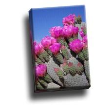 Beavertail Cactus Joshua Tree National Park