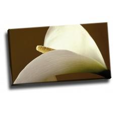 Close-Up of a Calla Lily